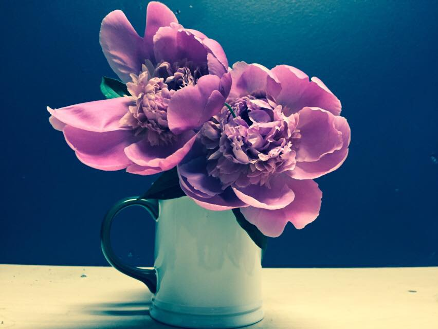 Begonias in herhair