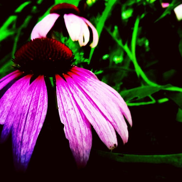 Fallen stress petals